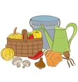 garden tools and harvest basket vector image