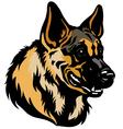 german shepherd head vector image