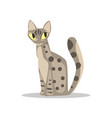 cute gray short-haired cat with spotted body vector image