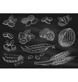 Nuts grain chalk sketch icons on blackboard vector image