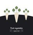 Daikon vegetables vector image