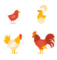 a colorful farm birds collection vector image