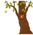 Cartoon oak and squirrel vector image vector image