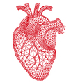 human heart with geometric pattern vector image