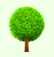cute tree with green leaves realistic spring or vector image