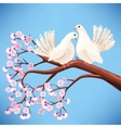 Two white doves on the branch vector image