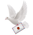 Dove white vector image