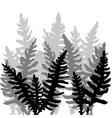 Set of ink drawing fern leaves vector image