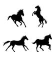 Black horses vector image