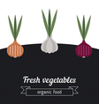 Onion and garlic vegetables vector image