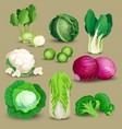 Vegetable set with cabbages vector image