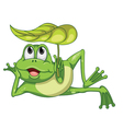 green frog and leaf vector image vector image