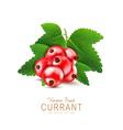 currant3 vs vector image