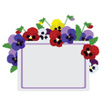 pansies card vector image