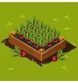 Vegetable Garden Box with Beet Set 3 vector image