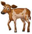 little calf standing on white background vector image vector image