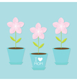 Sakura flower pot set Japan blooming cherry vector image