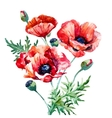 Watercolor poppy composition vector image