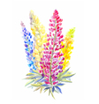 bouquet of lupine different color in watercolor vector image
