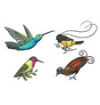 small hummingbird rufous and white-necked jacobin vector image