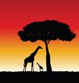giraffe art silhouette vector image