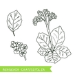 Handdrawn - Health and Nature Set vector image
