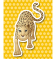 Leopard vector image