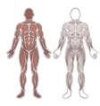 Human muscles silhouette vector image