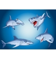 Set of scary sharks in cartoon style vector image