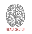 Vintage sketch of human brain for creative design vector image vector image