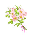 dog roses flowers on white vector image