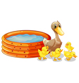 An inflatable pool at the back of the five ducks vector image vector image