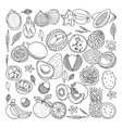 tropical fruits doodle set vector image