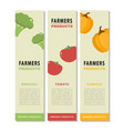 design template of a vegetable vertical flyers vector image