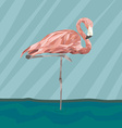 FlamingoStand17 vector image