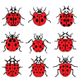 red ladybugs vector image