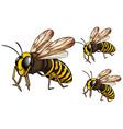 Wasps vector image vector image