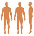Fashion body full length bald template figure vector image