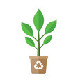 plant in pot element vector image