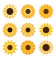 sunflower emblem set vector image