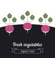 Radish vegetables vector image