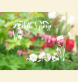 background with spring garden flowers vector image