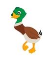 Cartoon Duck vector image
