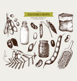 vintage set of legumes on white vector image