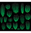 Set of Tropical Leaves on black vector image vector image