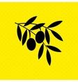 olive oil design vector image
