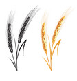 black ang gold wheat isolated on white background vector image