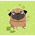 Pug dog finds the money background with bones vector image