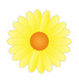 cute sunflower on white background vector image vector image