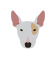isolated bull terrier avatar vector image